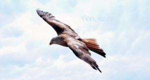 freedom-589576